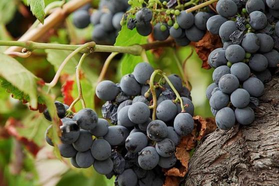 Exploring Camino de Santiago's ancient wine trail